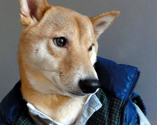 Menswear-Dog-11