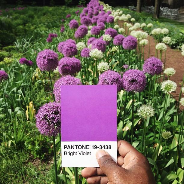 Pantone 19-3438  por Paul Octavius